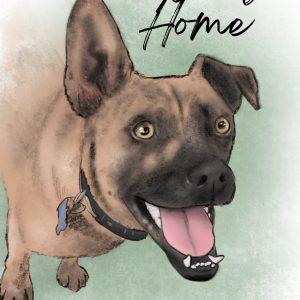 Halfway Home - A Dog Adoption Story